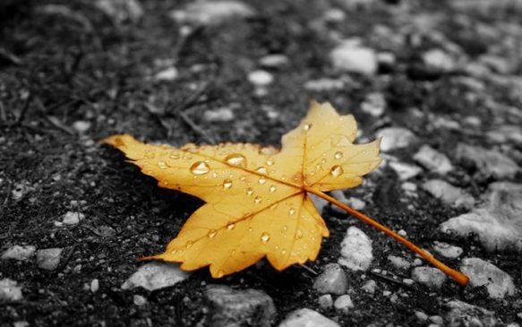 Осень - пора обострения хронических заболеваний ЦМЭИ