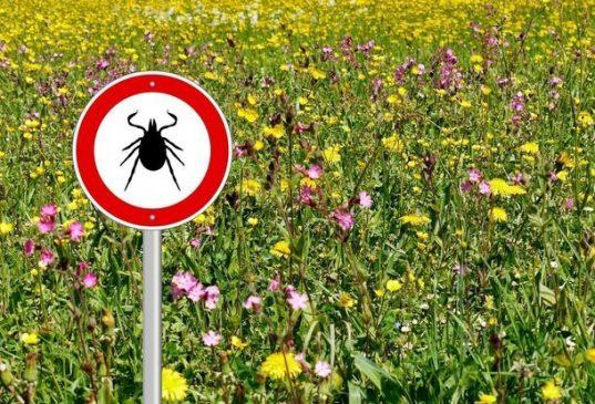 Клещи. Чем они опасны для человека?