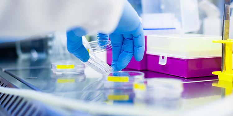 Иммунологические исследования